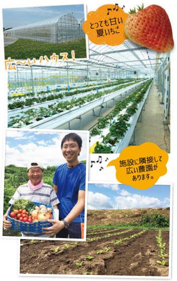 野菜・果実の栽培画像